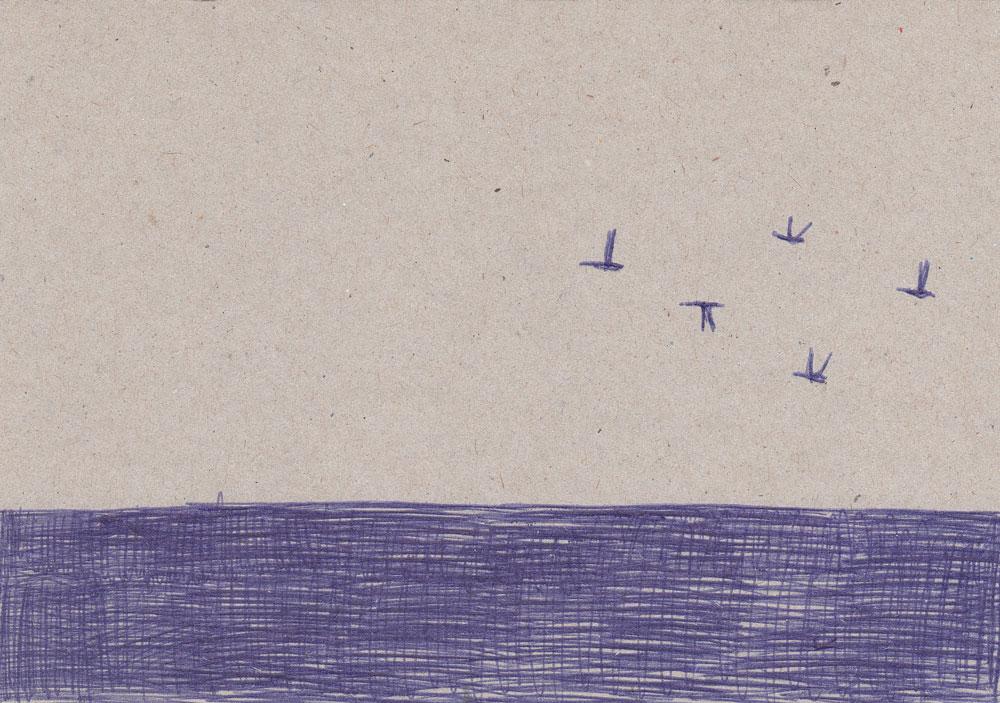 meer-und-vögel